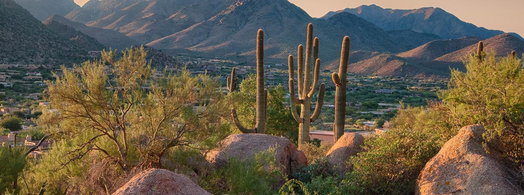 the Arizona desert